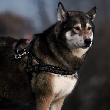 Der Mensch erzählt die Geschichte, der Hund zeigt mir eine andere Wahrheit