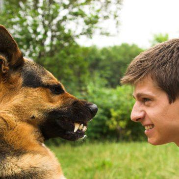 Der frühe Schritt zum Hunde-Profi, ist ein Schritt in die richtige Richtung!