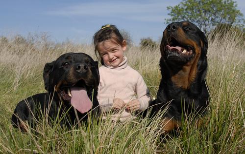 Begegnungen zwischen Kind und Hund, eine wunderbare Sache? Sicher, jedoch mit gewissen Regeln!
