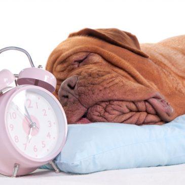 Timing in der Hundeführung, ein unterschätzter aber elementarer Faktor