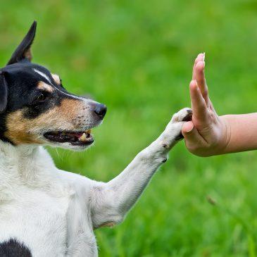 Teamtraining und Hundecoaching, was bedeutet das eigentlich?