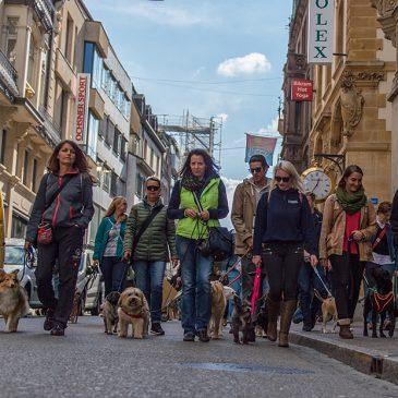 Flashmob mit 35 Hunden in der Stadt Basel – Das DDC-Team war dabei!