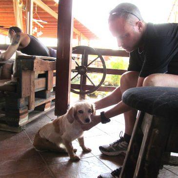 Können Hunde Gefahren anzeigen? Erdbeben in Kos / Griechenland