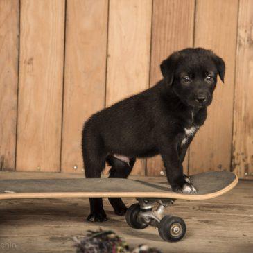 6. Juni 2019 | 2. Event – Herkunft – Woher stammt (D)ein Hund