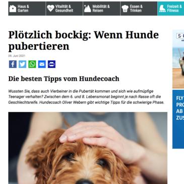 Presse: Plötzlich bockig: Wenn Hunde pubertieren